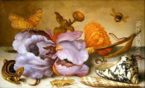 Still life depicting flowers, shells and insects Oil Painting - Balthasar Van Der Ast