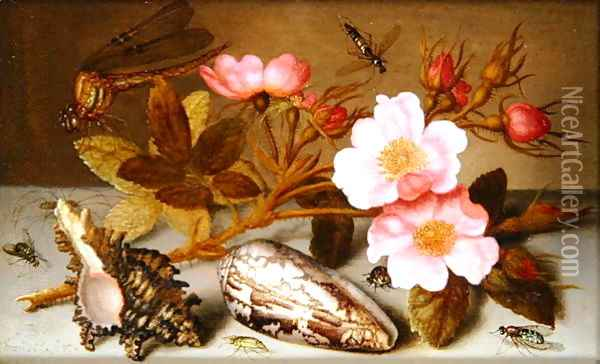 Still life depicting flowers, shells and a dragonfly Oil Painting - Balthasar Van Der Ast