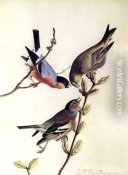 A Chaffinch, Bullfinch and Greenfinch on a Branch of Budding Chestnuts Oil Painting - John James Audubon