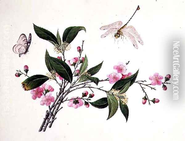 Cherry Blossom, Dragonfly and Butterfly Oil Painting - Anonymous Artist