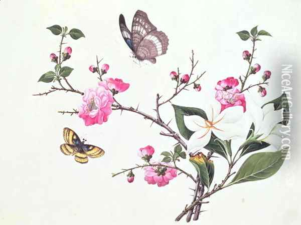 Japonica, Magnolia and Butterflies Oil Painting - Anonymous Artist