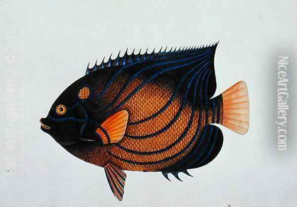 Exotic Fish, from 'Drawings of Fishes from Malacca', c.1805-18 Oil Painting - Anonymous Artist