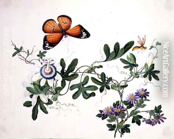 Passion Flower and Butterfly Oil Painting - Anonymous Artist