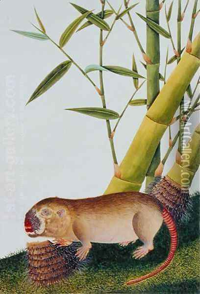 Bamboo Rat, Decan, from 'Drawings of Animals, Insects and Reptiles from Malacca', c.1805-18 Oil Painting - Anonymous Artist