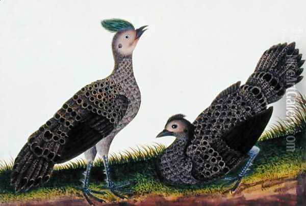 A Cock and Hen Kooaw Chirmin from 'Drawings of Birds from Malacca', c.1805-18 Oil Painting - Anonymous Artist