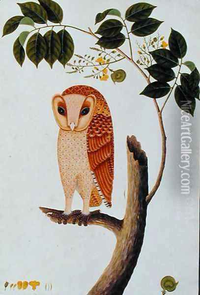 Owl, Boorong antoo, from 'Drawings of Birds from Malacca', c.1805-18 Oil Painting - Anonymous Artist