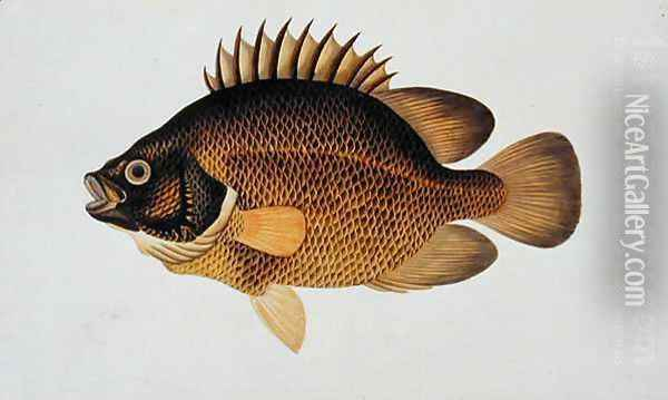 Eekan Te-cha Prie-o, from 'Drawings of Fishes from Malacca', c.1805-18 Oil Painting - Anonymous Artist