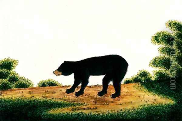 Bear, Broo-ang, from 'Drawings of Animals, Insects and Reptiles from Malacca', c.1805-18 Oil Painting - Anonymous Artist