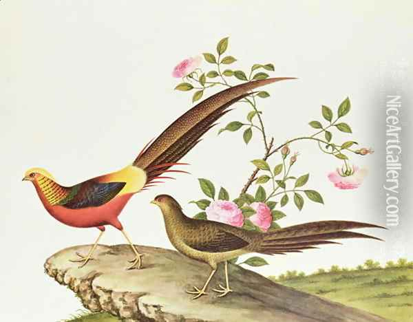 A golden pheasant, Ch'ien-lung period (1736-96) Oil Painting - Anonymous Artist