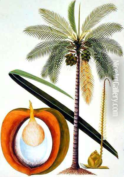 Cocoa Nut Tree, from 'Drawings of Plants from Malacca', c.1805-18 Oil Painting - Anonymous Artist