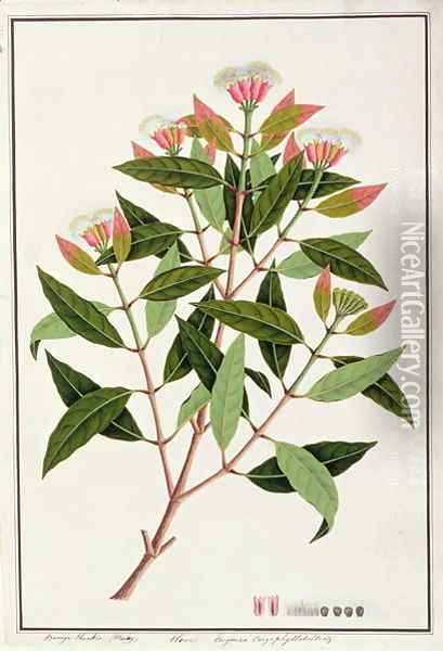 Boongo Chinkie (Malay), Eugenia Caryophyllatallen or Clove, from 'Drawings of Plants from Malacca', c.1805-18 Oil Painting - Anonymous Artist