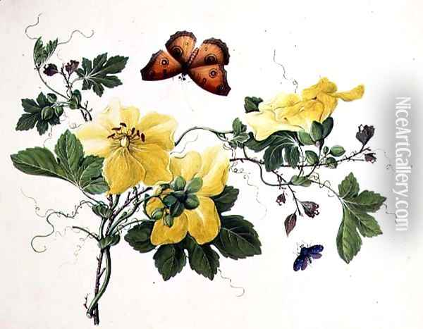 Flower Study and Butterfly Oil Painting - Anonymous Artist