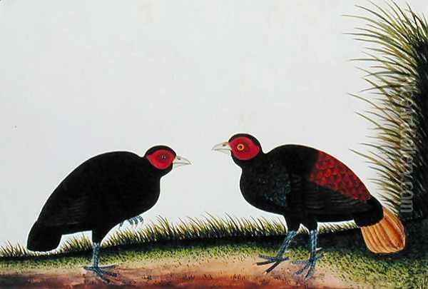 A Hen and Cock Pegur, from 'Drawings of Birds from Malacca', c.1805-18 Oil Painting - Anonymous Artist