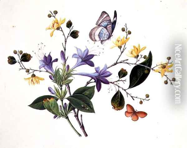 Flower Study and Insects Oil Painting - Anonymous Artist