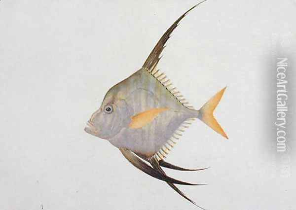 Eekan Madoe Madoe, from 'Drawings of Fishes from Malacca', c.1805-18 Oil Painting - Anonymous Artist