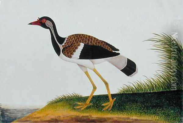 Tie Tieoo or Aian colan (Malay) from 'Drawings of Birds from Malacca', c.1805-18 Oil Painting - Anonymous Artist