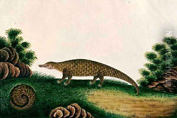The Pangolin of Malacca, Tingieling (Malay) from 'Drawings of Animals, Insects and Reptiles from Malacca', c.1805-18 Oil Painting - Anonymous Artist