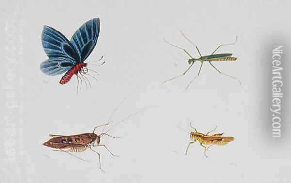 Insects, from 'Drawings of Animals, Insects and Reptiles from Malacca', c.1805-18 Oil Painting - Anonymous Artist
