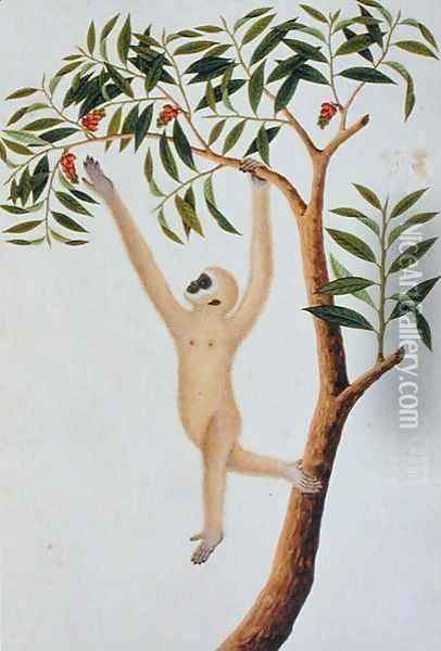 White Long Armed Ape, Ongka Pootre, from 'Drawings of Animals, Insects and Reptiles from Malacca', c.1805-18 Oil Painting - Anonymous Artist