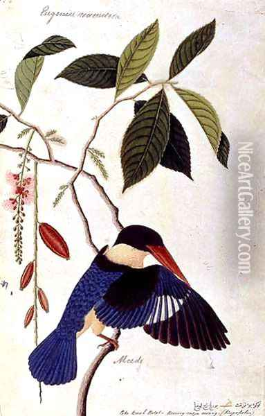 Kingfisher or Alced, Poko Booah Pootal, Boorong radja oodang, from 'Drawings of Birds from Malacca', c.1805-18 Oil Painting - Anonymous Artist