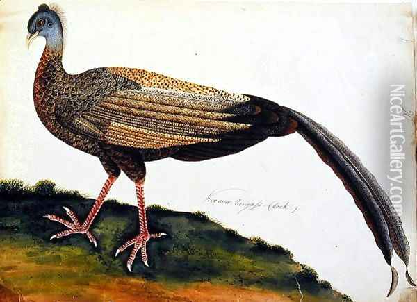 Koo auio Tangass - Cock, from 'Drawings of Birds from Malacca', c.1805-18 Oil Painting - Anonymous Artist