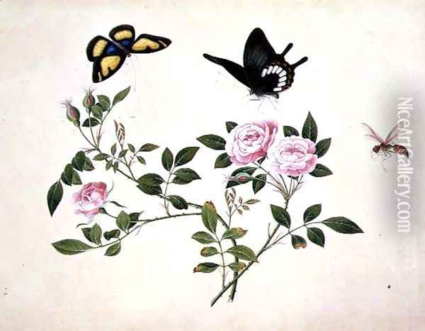 Roses in Bud and Bloom with Butterflies and Insects Oil Painting - Anonymous Artist