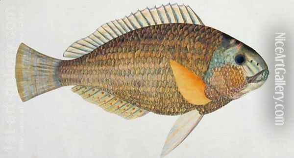 Eekan Kak atoo-ah, from 'Drawings of Fishes from Malacca', c.1805-18 Oil Painting - Anonymous Artist
