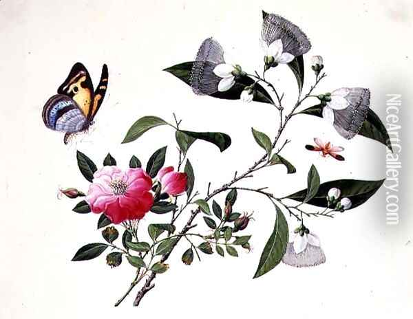 Flower Study and Insects (2) Oil Painting - Anonymous Artist