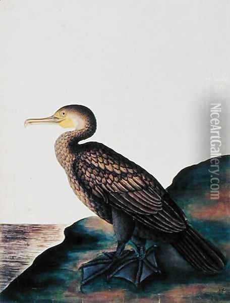 Duck, from 'Drawings of Birds from Malacca', c.1805-18 Oil Painting - Anonymous Artist
