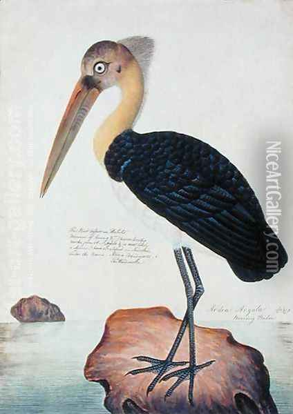 Ardea Argala, from 'Drawings of Birds from Malacca', c.1805-18 Oil Painting - Anonymous Artist