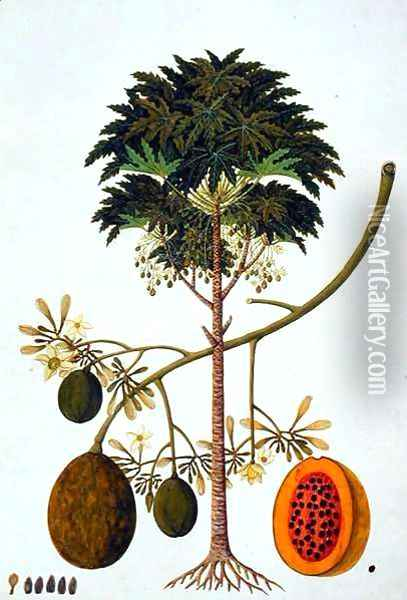 Dapai-ah Tambay or Carica, from 'Drawings of Plants from Malacca', c.1805-18 Oil Painting - Anonymous Artist