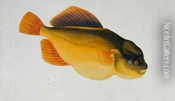 Eekan Boontal Pesang, from 'Drawings of Fishes from Malacca', c.1805-18 Oil Painting - Anonymous Artist