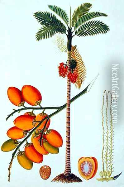 Pinang Betle Nut Tree, from 'Drawings of Plants from Malacca', c.1805-18 Oil Painting - Anonymous Artist