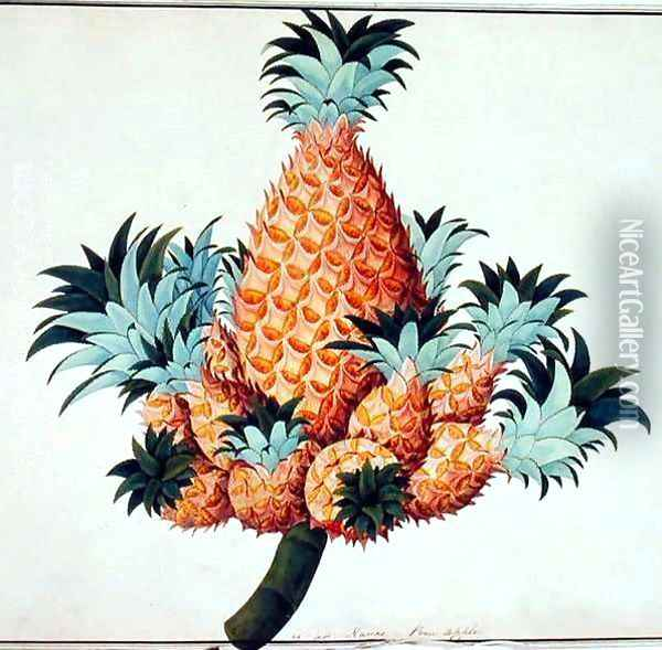 Nanas or Pineapple, from 'Drawings of Plants from Malacca', c.1805-18 Oil Painting - Anonymous Artist