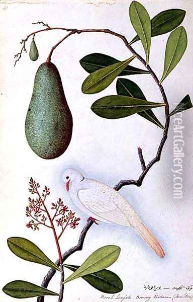 Java Dove or Boorah Poutaran, from 'Drawings of Birds from Malacca', c.1805-18 Oil Painting - Anonymous Artist