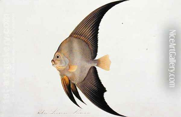 Eekan Leeman Leeman, from 'Drawings of Fishes from Malacca', c.1805-18 Oil Painting - Anonymous Artist