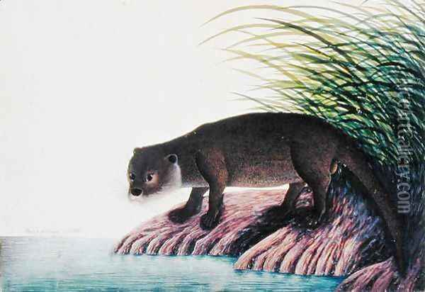 Otter, Brang-Brang, from 'Drawings of Animals, Insects and Reptiles from Malacca', c.1805-18 Oil Painting - Anonymous Artist