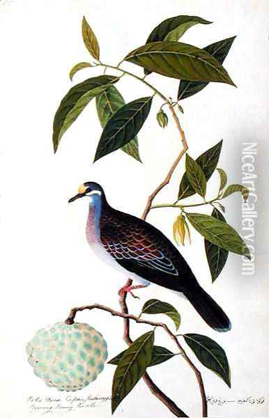 Custard Apple, Poke Nona Caprie with Boorong Pooney Sieole, from 'Drawings of Birds from Malacca', c.1805-18 Oil Painting - Anonymous Artist