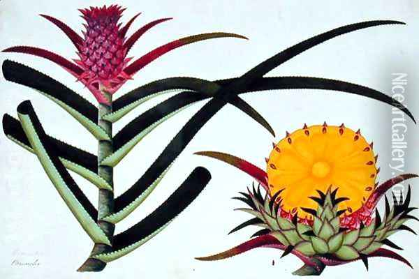 Pineapple or Bromelia, from 'Drawings of Plants from Malacca', c.1805-18 Oil Painting - Anonymous Artist