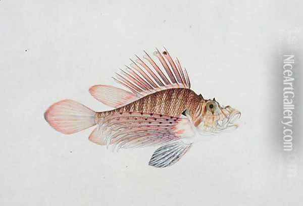 Eekan Linqah Singah, from 'Drawings of Fishes from Malacca', c.1805-18 Oil Painting - Anonymous Artist