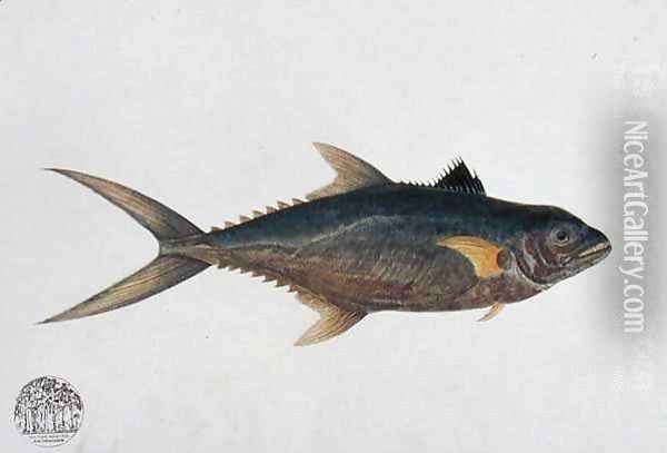 Eekan Tinierie Papan, from 'Drawings of Fishes from Malacca', c.1805-18 Oil Painting - Anonymous Artist