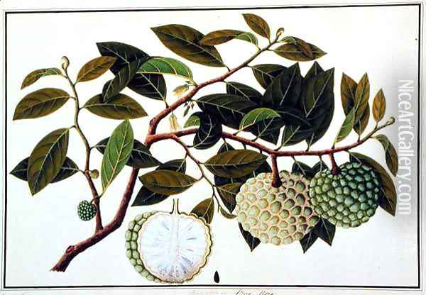 Bua Nora, from 'Drawings of Plants from Malacca', c.1805-18 Oil Painting - Anonymous Artist
