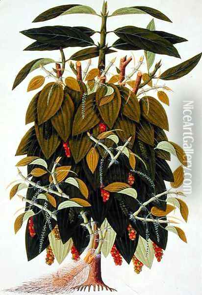 Lava Etam or Black Pepper, from Drawings of Plants from Malacca', c.1805-18 Oil Painting - Anonymous Artist