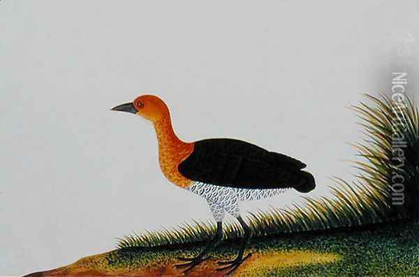 Exotic Bird, from 'Drawings of Birds from Malacca', c.1805-18 (2) Oil Painting - Anonymous Artist