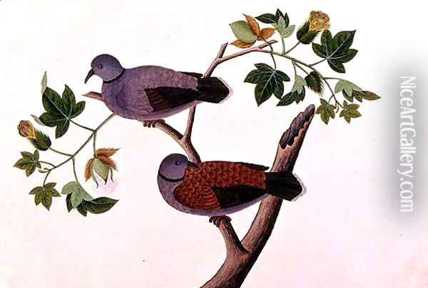 Birds in a tree, from 'Drawings of Birds from Malacca', c.1805-18 Oil Painting - Anonymous Artist