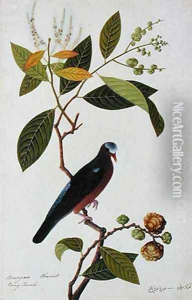 Brangan Chestnut, Pooney Tanah, from 'Drawings of Birds from Malacca', c.1805-18 Oil Painting - Anonymous Artist