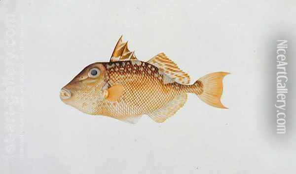 Eekan Jebong, from 'Drawings of Fishes from Malacca', c.1805-18 Oil Painting - Anonymous Artist
