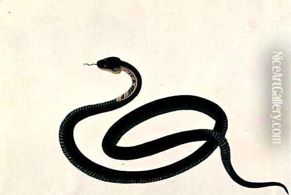 Snake, from 'Drawings of Animals, Insects and Reptiles from Malacca', c.1805-18 Oil Painting - Anonymous Artist