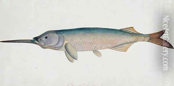 Eekan Todah Pindik, from 'Drawings of Fishes from Malacca', c.1805-18 Oil Painting - Anonymous Artist