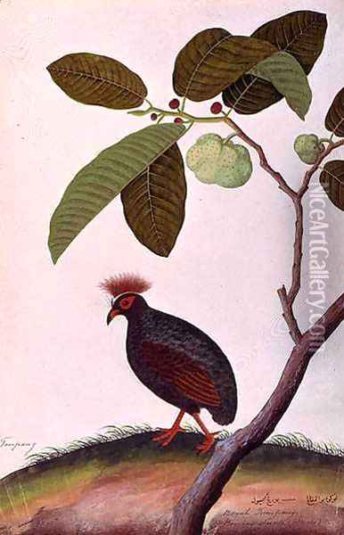 Booah Tumpang, from 'Drawings of Birds from Malacca', c.1805-18 Oil Painting - Anonymous Artist